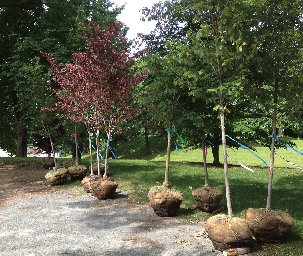 trees for planting 13