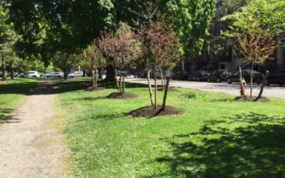 New Trees Planted in the Park