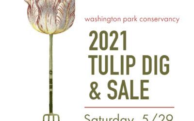 Tulip Dig & Sale