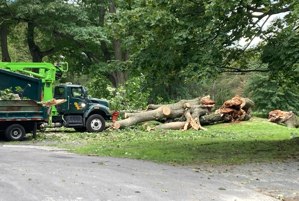 Loss of a Red Oak Tree